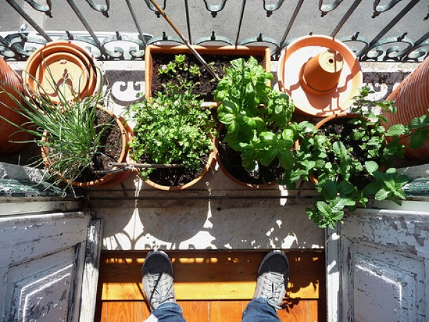 As hortas domésticas despertam a consciência sobre a origem dos alimentos consumidos. - Foto: Flickr
