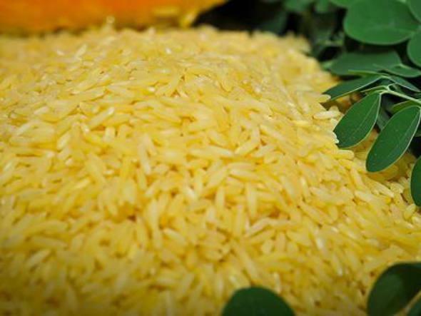 size_590_Foto_divulgada_pelo_Instituto_Internacional_de_Pesquisa_do_Arroz_IRRI_mostra_arroz_transgênico