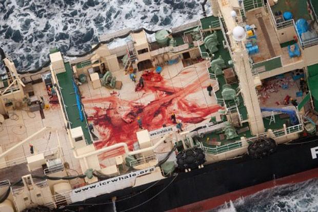 Foto: Tim Watters/Sea Shepherd/AFP