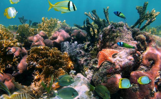 corais-1