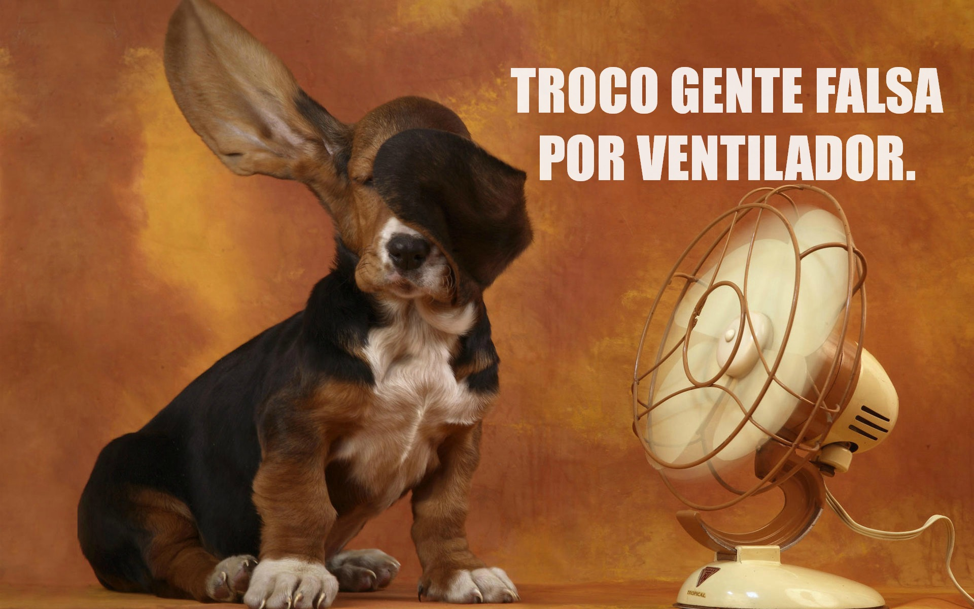 cachorro_no_ventilador_BLOGUE