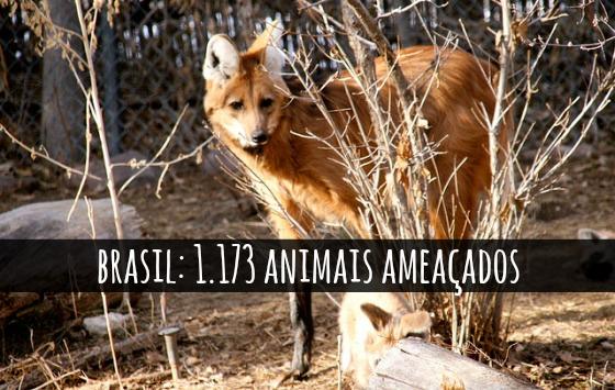 animais-proximas-geracoes-podem-nao-conhecer blog