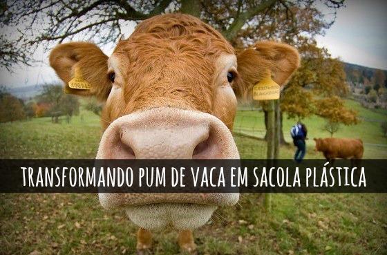 tecnologia-transforma-flatulencia-vacas-sacolas-plasticas_blog