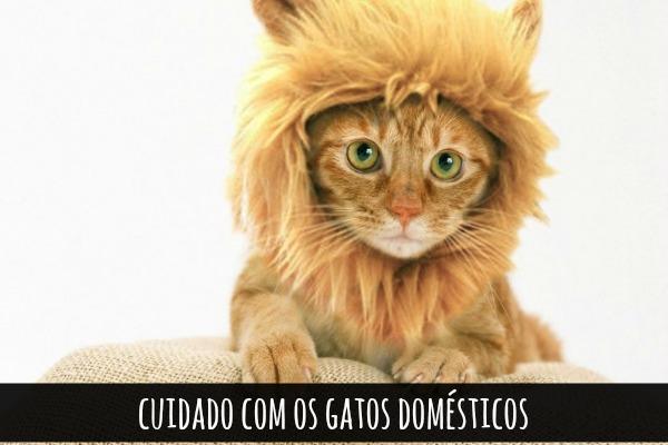 gato-domestico-personalidade-de-um-leao-blog