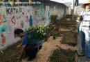 Prefeitura de Curitiba libera cultivo de hortas em calçadas