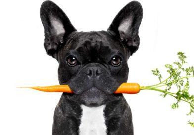 Os cães e gatos podem comer frutas e vegetais?