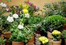 Dicas para preservar plantas em casa e no quintal