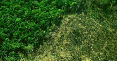 Crise econômica, instabilidade política e desmatamento