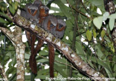 381 novas espécies foram descobertas na Amazônia