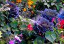 Dicas para um jardim sempre florido