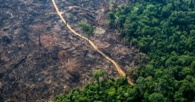 Desmatamento cresce 32% nas Terras Indígenas da Amazônia