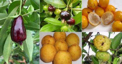 Superfrutas da Mata Atlântica lutam contra extinção