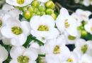 Flores que ajudam (muito) na sua horta orgânica