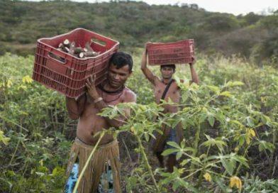 Delegação brasileira vai ao Japão discutir agricultura tradicional
