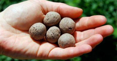 Aprenda a fazer bombas de sementes
