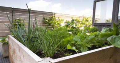 Hortas caseiras: 3 ideias de como plantar