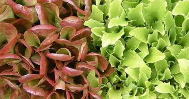 Mês a mês: O que se deve plantar na horta?