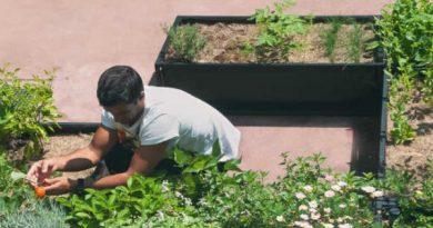 8 pontos essenciais para começar uma horta urbana