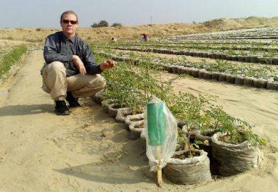 Técnica transforma areia do deserto em solo fértil
