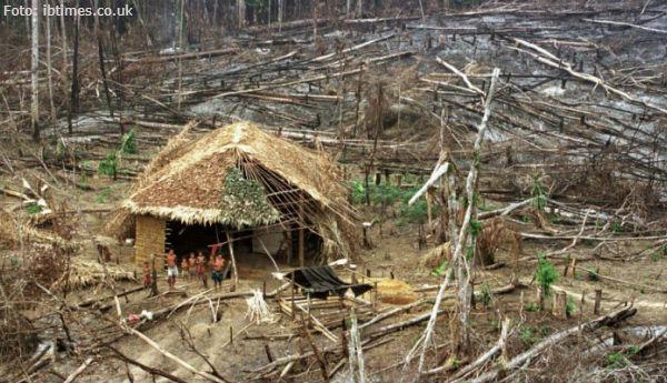 Desmatamento explode em terras indígenas
