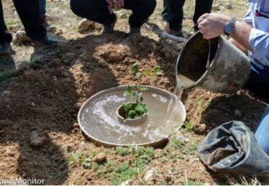 Vaso protege crescimento de árvores em regiões áridas