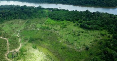 100 milhões de árvores foram derrubadas no Xingu em 6 meses