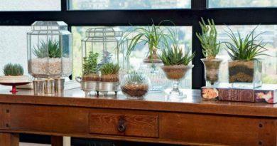 Conheça 13 plantas para cultivar dentro de casa