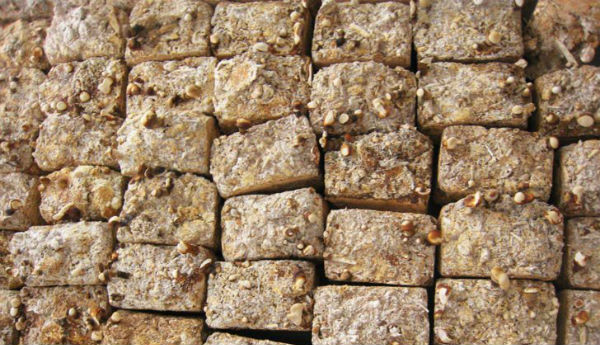O tijolo feito de cogumelos que é mais resistente que o concreto