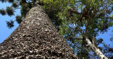 Paraná incentiva quem preserva áreas naturais de forma voluntária